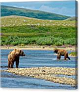 Grizzly Bear Communication In The Moraine River In Katmai  Np-ak Canvas Print
