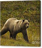 Grizzly Bear Canvas Print