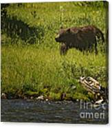 Grizzly Bear-signed-#1158 Canvas Print