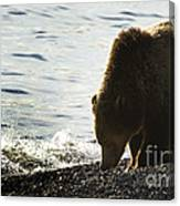 Grizzly Bear-signed-#4137 Canvas Print