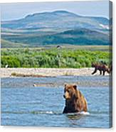 Grizzly Bears In Moraine River In Katmai National Preserve-ak Canvas Print