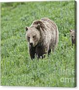 Grizzly Family On Dunraven Canvas Print