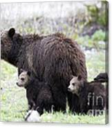 Grizzly Family Portrait Canvas Print