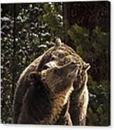Grizzly Love Canvas Print