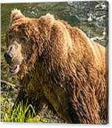 Grizzly On The River Bank Canvas Print