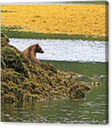 Grizzly Relaxing Canvas Print