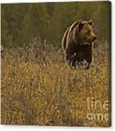 Grizzly Sow And Cub   #6365 Canvas Print