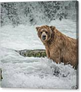 Grizzly Stare Canvas Print