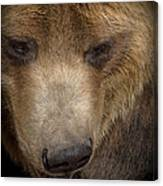 Grizzly Upclose Canvas Print