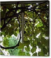 Gropius Vine Canvas Print
