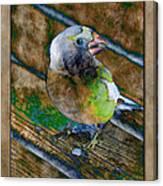 Grosbeak Canvas Print