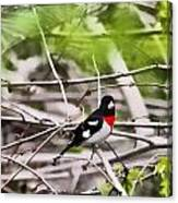 Grosbeaks Canvas Print