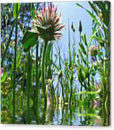 Ground Level Flora Canvas Print