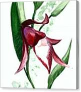 Ground Orchid Canvas Print