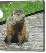 Groundhog Holding A Stick Canvas Print