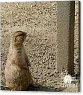 Groundhog With Shadow Canvas Print