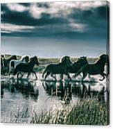 Group Of Horses Crossing A River Canvas Print