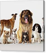 Group Portrait Of Dogs Canvas Print
