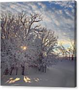 Grove And Road - Winter Canvas Print