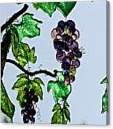 Growing Glass Grapes Canvas Print