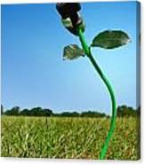 Growing Green Energy Canvas Print
