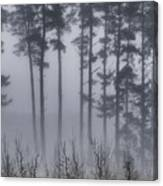 Growing In The Fog Canvas Print