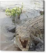 Grumpy Crocodile  Canvas Print
