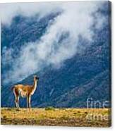 Guanaco Mother And Child Canvas Print