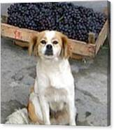 Guardian Of The Grapes Canvas Print