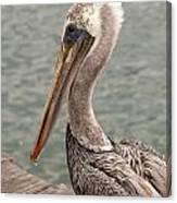 Guardian Pelican Canvas Print