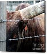 Guarding The Fence V2 Canvas Print