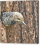 Guarding The Nest Canvas Print