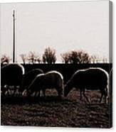 Guarding The Sheep Canvas Print