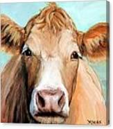 Guernsey Cream Cow On Light Green Canvas Print