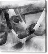 Guerrilla Just Chillaxing Photo Art Canvas Print