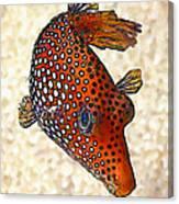 Guinea Fowl Puffer Fish Canvas Print