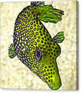 Guinea Fowl Puffer Fish In Green Canvas Print