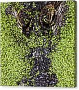 Gulf Coast Gator Canvas Print