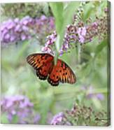 Gulf Fritillary Agraulis Vanillae-featured In Nature Photography-wildlife-newbies-comf Art Groups  Canvas Print