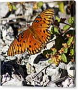 Gulf Fritillary Butterfly - Agraulis Vanillae Canvas Print