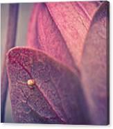Gulf Fritillary Butterfly Egg Canvas Print
