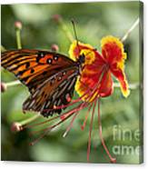 Gulf Fritillary Photo Canvas Print