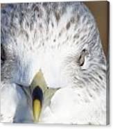 Gull  Canvas Print