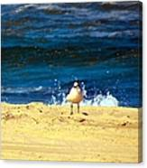 Gull Goer Canvas Print