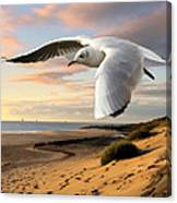 Gull On The Wing Over Beach Landscape Canvas Print