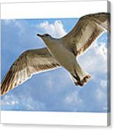 Gull - Out Of Bounds Canvas Print