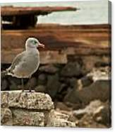 Gull Wall Canvas Print