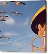 Gull Watching Canvas Print
