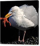 Gull With Starfish Canvas Print