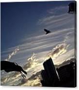 Gulls Fly Canvas Print